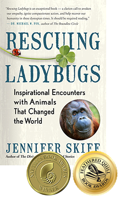 Rescuing Ladybugs book cover
